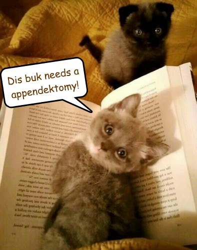 kitten appendectomy appendix caption - 8760492288