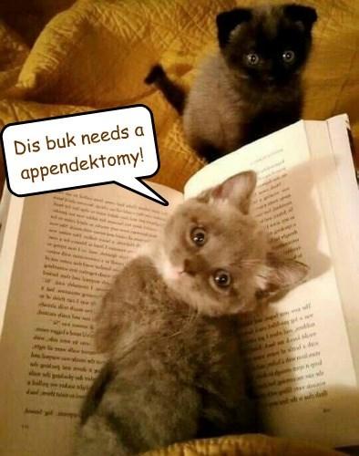 kitten appendectomy appendix caption - 8760492288