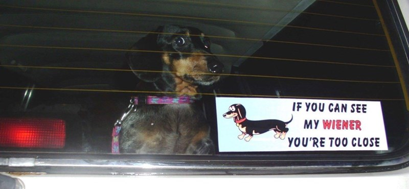 bumper sticker if you can see my wiener