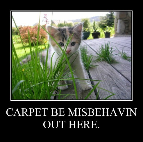 CARPET BE MISBEHAVIN OUT HERE.