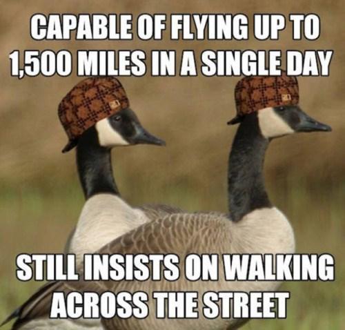 geese,scumbag hat