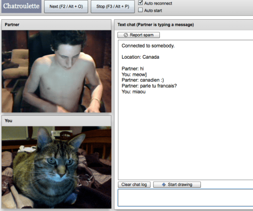 chatroulette meow Cats