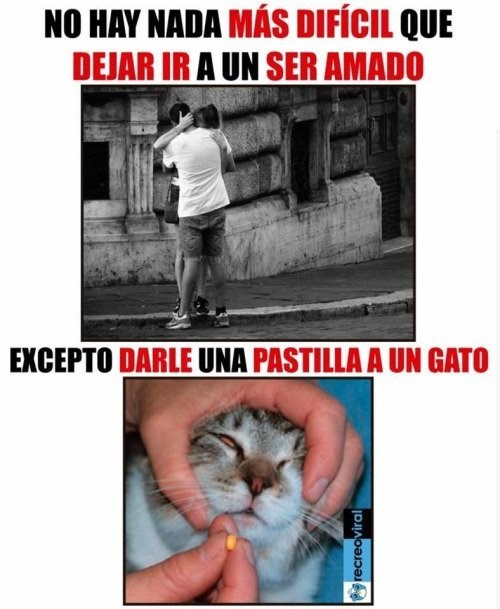 darle una pastilla a un gato