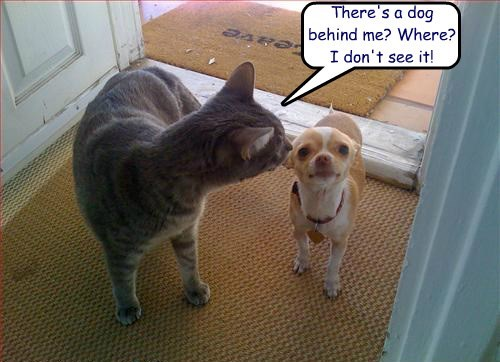 cat dogs see dont caption - 8760736256