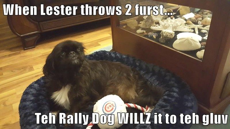 When Lester throws 2 furst...  Teh Rally Dog WILLZ it to teh gluv