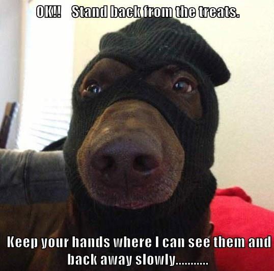 animals dogs caption - 8760788224