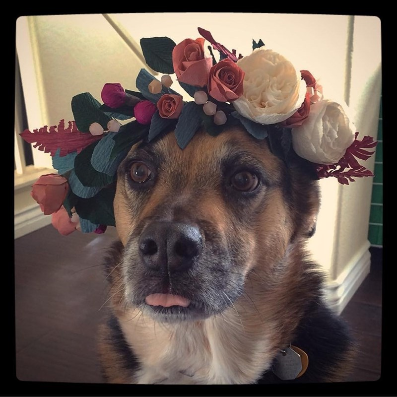 hipster dog is ready for coachella