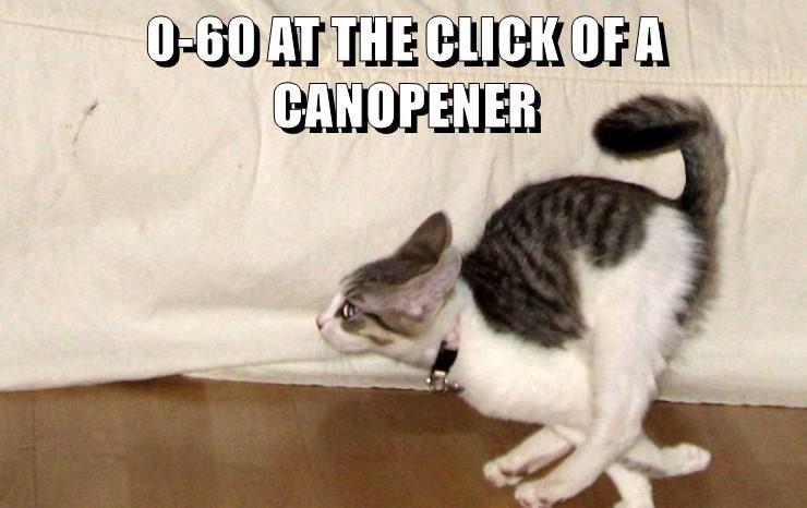 animals caption Cats - 8760840448
