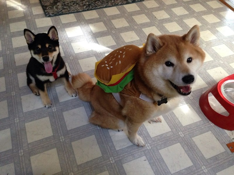 doge with a burger backpack