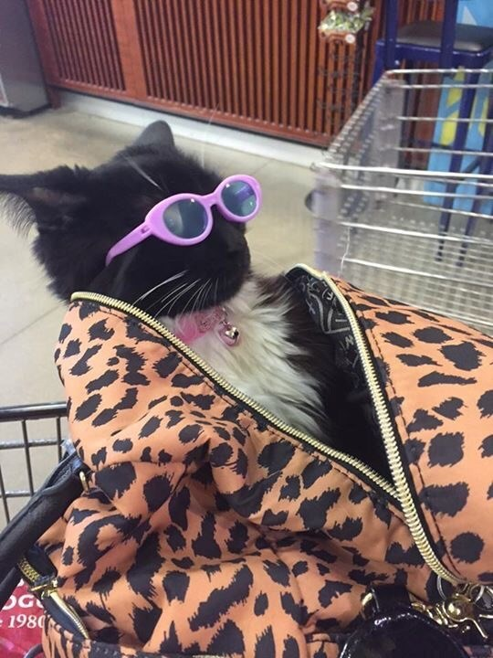 thrift shop cat is too cool