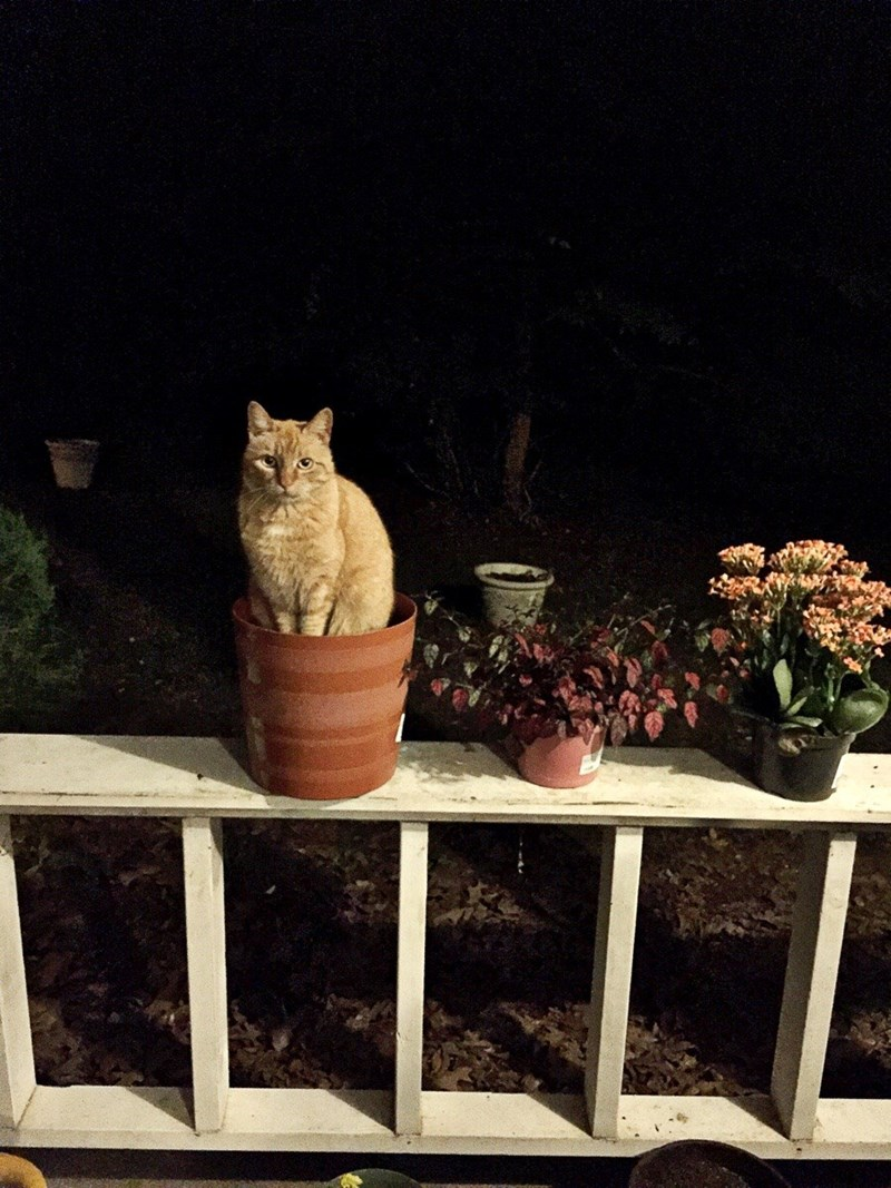 catplant is blooming