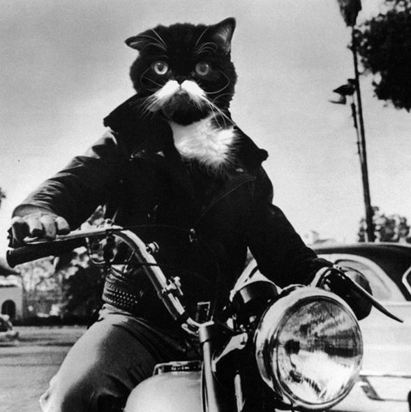kyle the cat - Cat