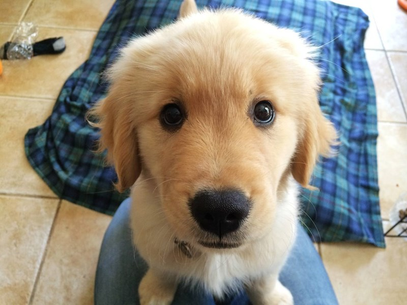 puppy dog eyes