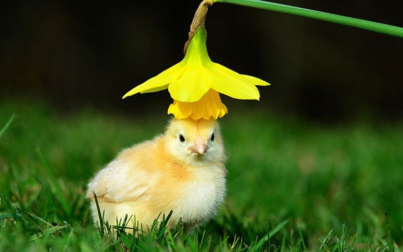 spring has sprung for chick