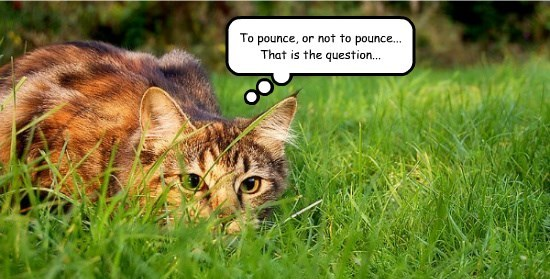 caption Cats - 8761211392