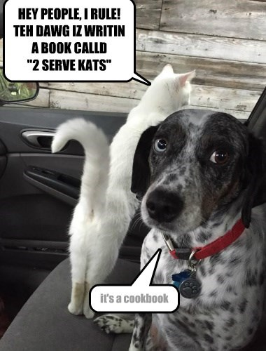 dogs,caption,cat,serve,cookbook