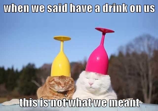 animals caption Cats - 8761261056