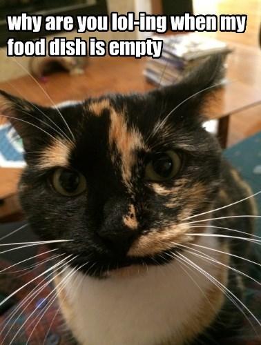 caption Cats - 8761369344
