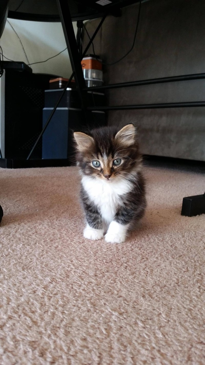 mini floof
