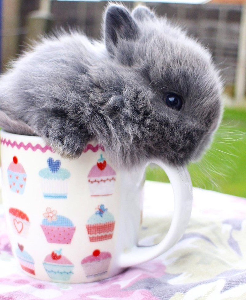 baby bunny in a cup
