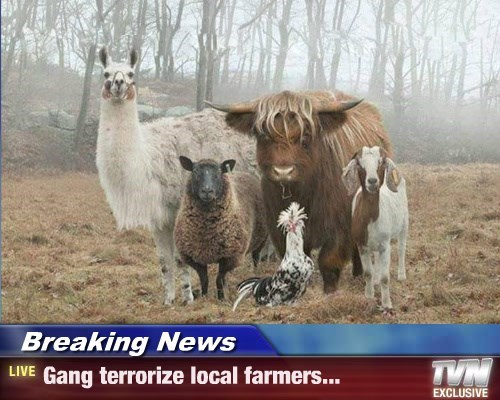 farmers Breaking News animals - 8761376256
