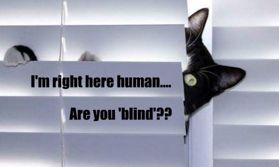 caption Cats - 8761410048