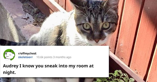 wholesome cat message