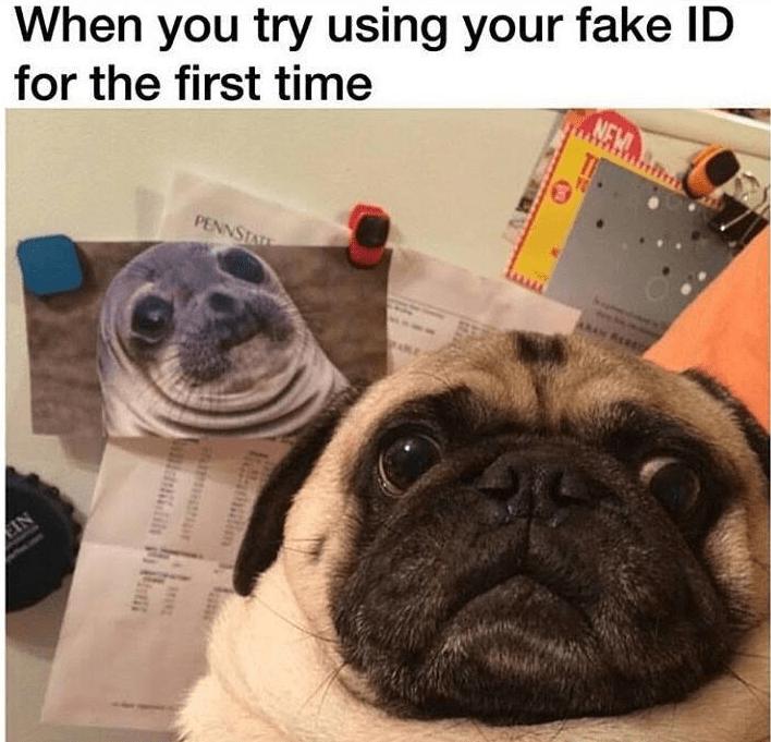 funny memes pug using awkward seal fake id