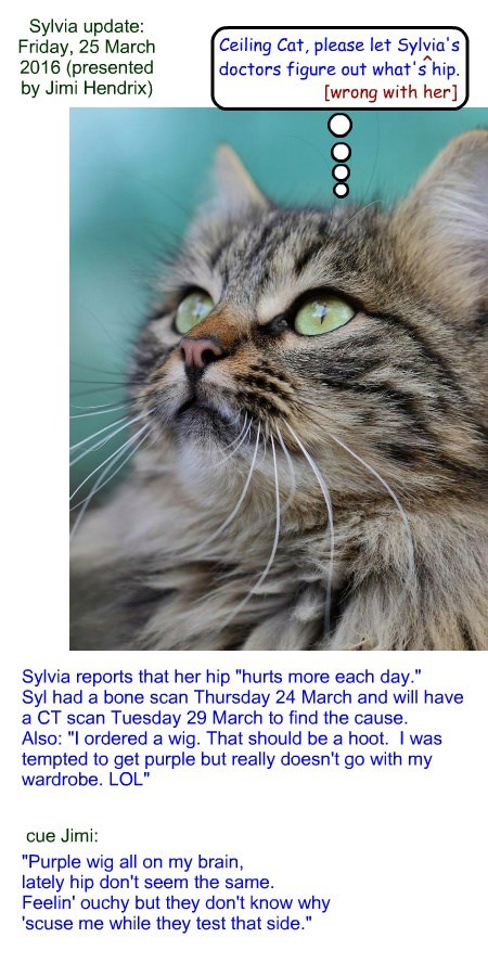 Sylvia update: Friday, 25 March 2016 (presented by Jimi Hendrix)