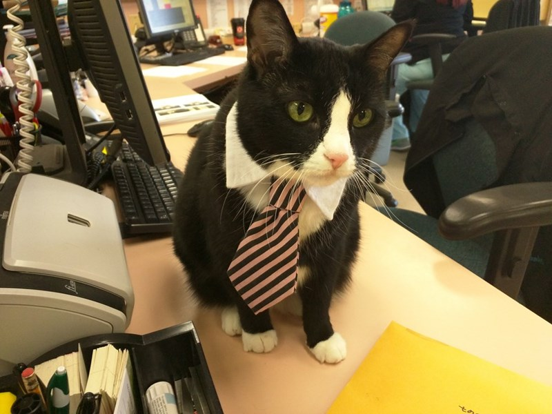 business cat says get back to work