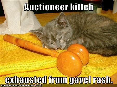 Auctioneer kitteh  exhausted frum gavel rash.