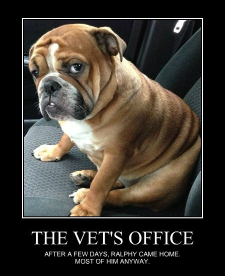 THE VET'S OFFICE