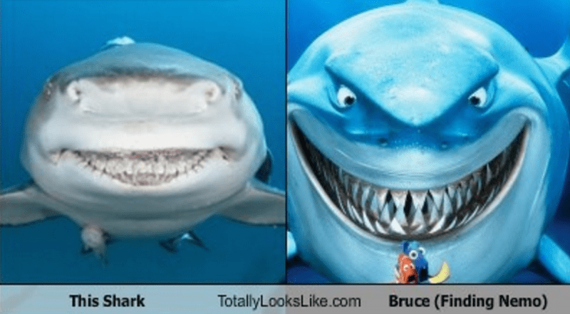 this shark totally looks like bruce from finding nemo