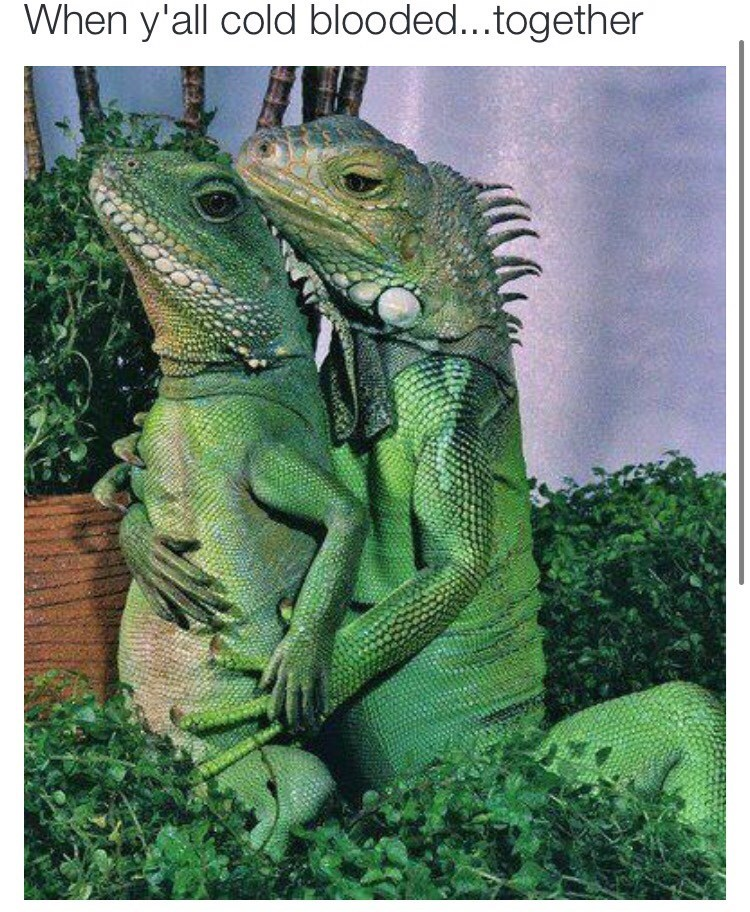 lizards dating - 8762089216
