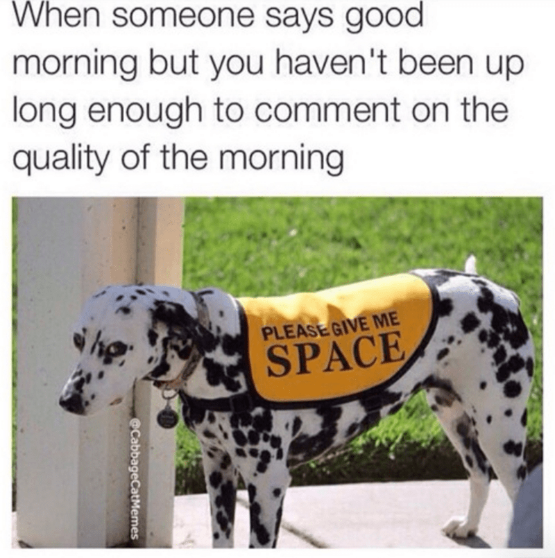 dogs,mornings,space