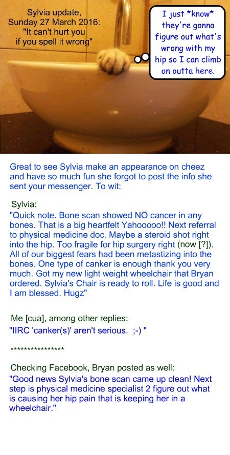 """Sylvia update, Sunday 27 March 2016: """"It can't hurt you if you spell it wrong"""""""