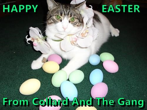 HAPPY                     EASTER  From Collard And The Gang