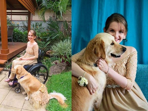 service dog wears matching prom dress