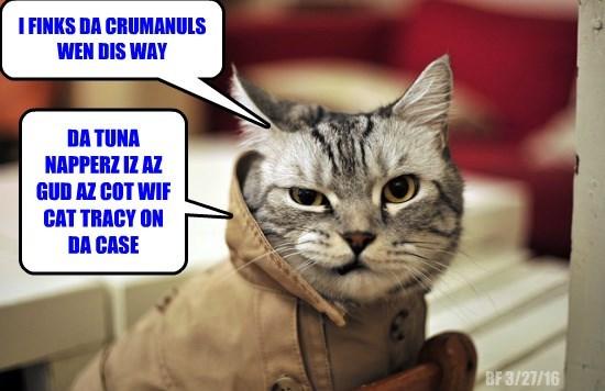 caption Cats - 8762243328