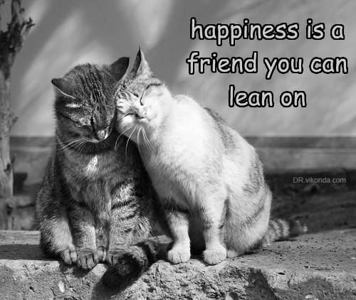 lean on caption Cats happiness - 8762243584