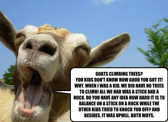 GOATS CLIMBING TREES? YOU KIDS DON'T KNOW HOW GOOD YOU GOT IT! WHY, WHEN I WAS A KID, WE DID HAVE NO TREES TO CLIMB! ALL WE HAD WAS A STICK AND A ROCK. DO YOU HAVE ANY IDEA HOW HARD IT IS TO BALANCE ON A STICK ON A ROCK WHILE THE OTHER KIDS TRIED TO KNOCK