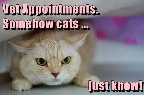 animals appointments Cats caption vet - 8762269184