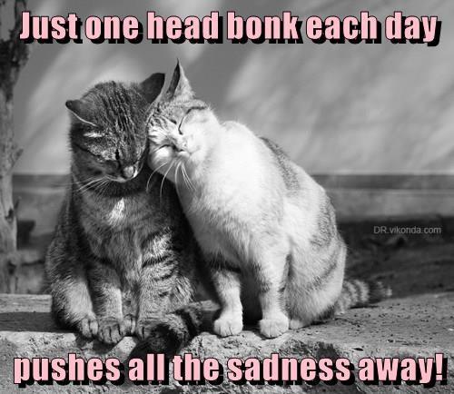 animals caption Cats - 8762273792