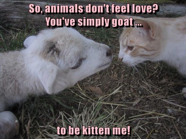 animals goats caption Cats - 8762330880