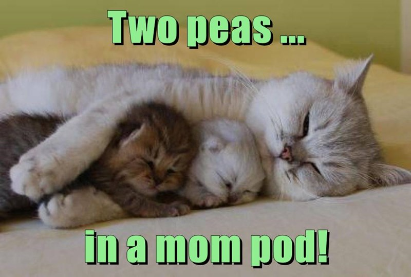 Cat - Two peas. in a mom pod!