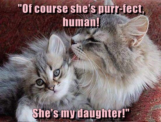 animals caption Cats - 8762335744