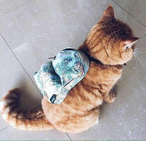 kitty backpack purrsonal belongings