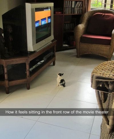 kitten front row at the movie theater