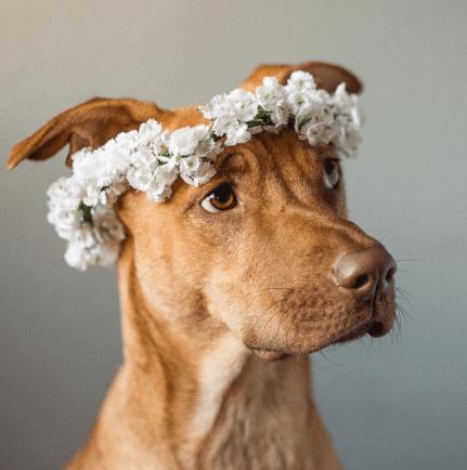 flower crown - Vertebrate