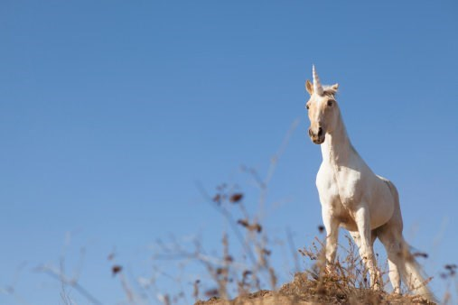 Unicorns Were Real, and They Lived in Kazakhstan